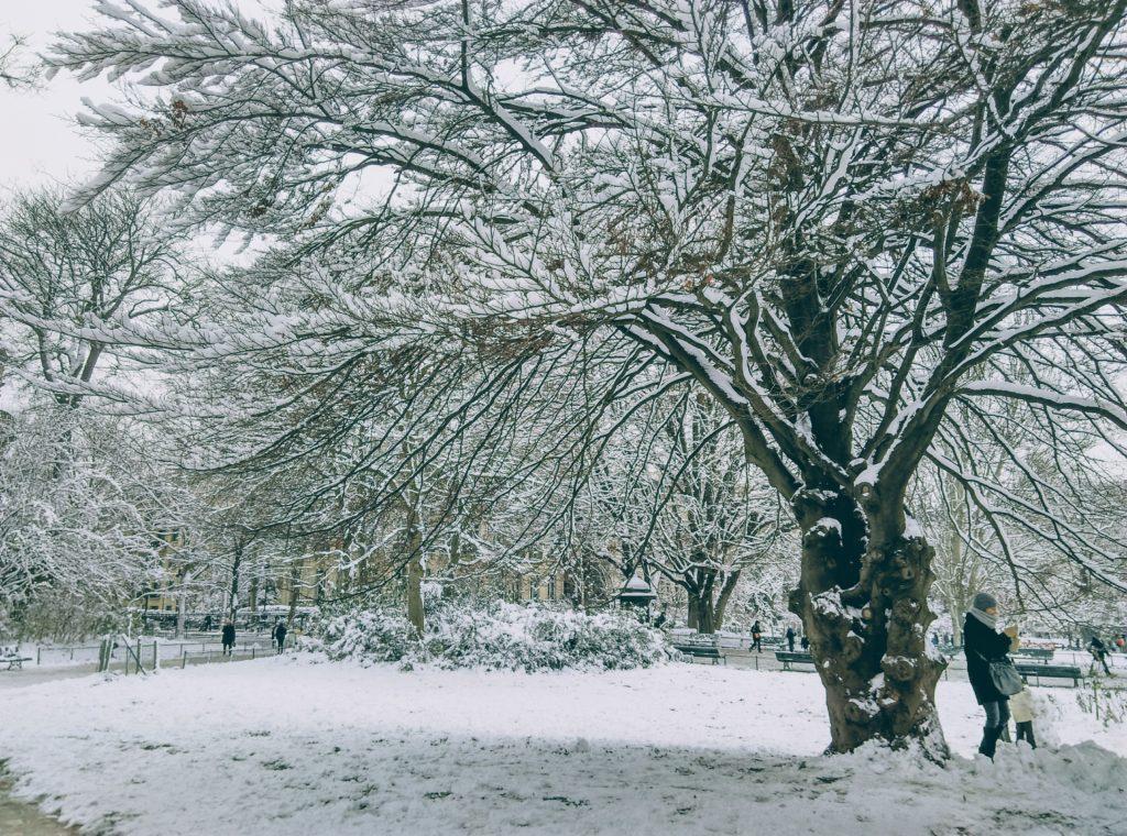 mon arbre en hiver